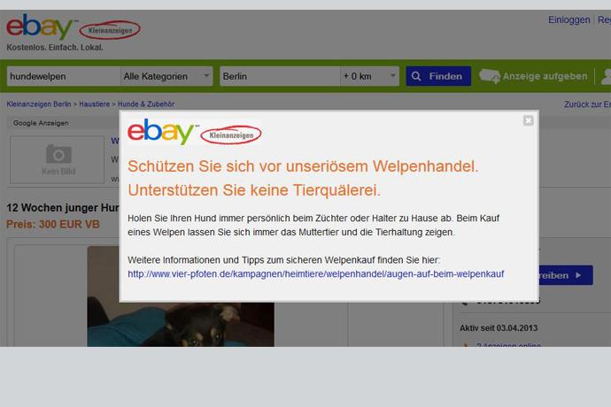 hunde auf ebay