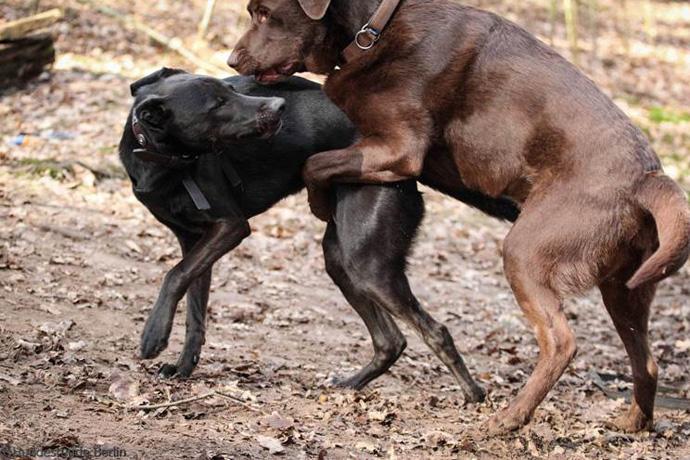 vertrag deckakt hund