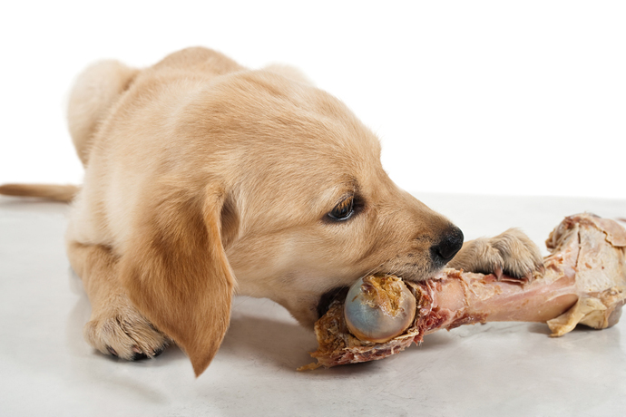 Is Offal Good For Dogs